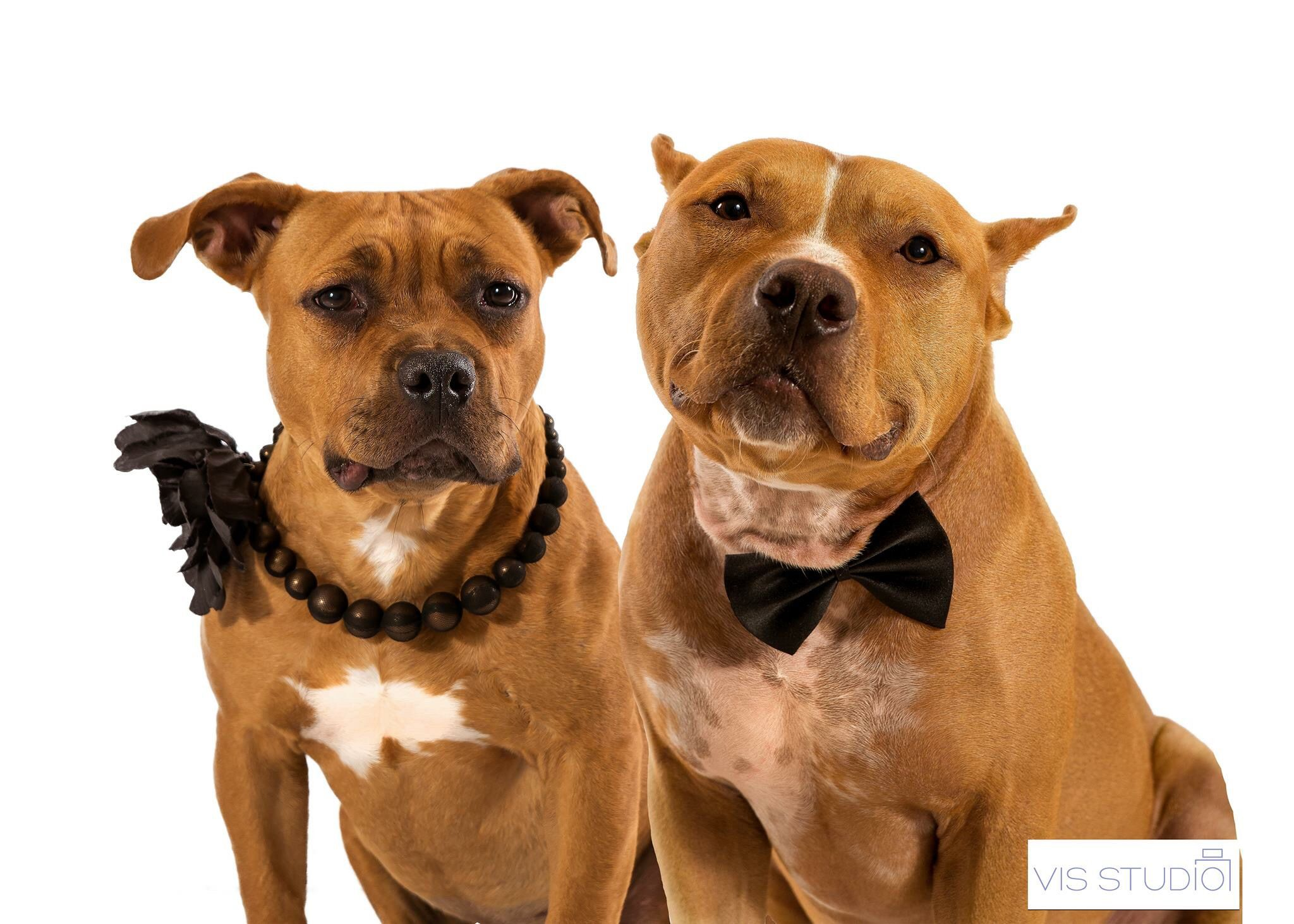 Pet Photographer Pet Photography Dog Photographer Dog