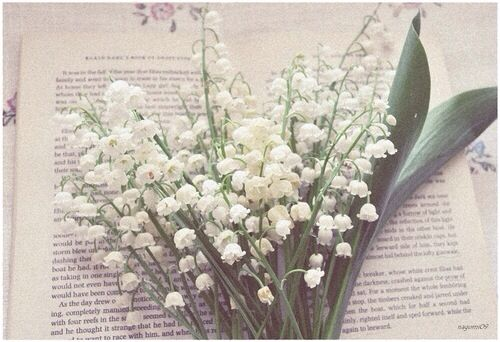 Lily of The Valley flowers on top of  a book page