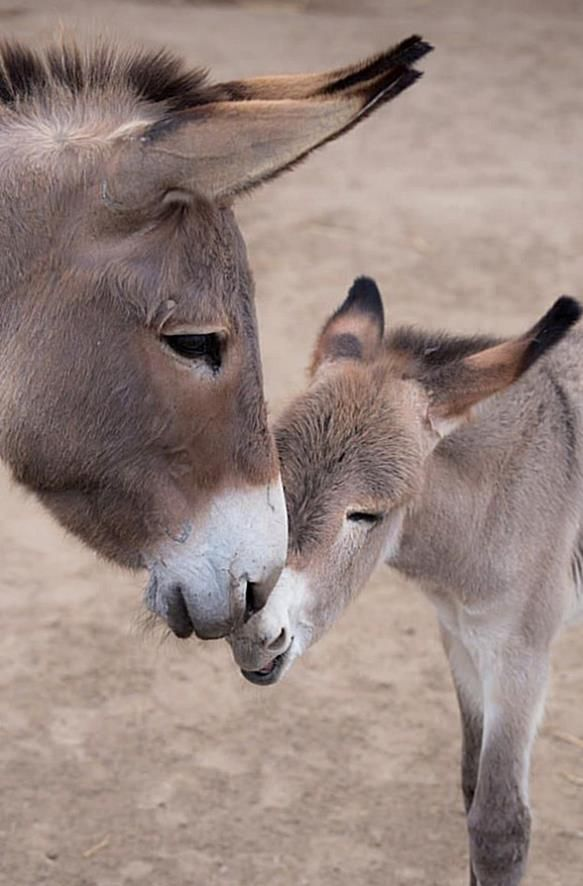 Baby animals have the power to melt all hearts even those made of steel.…