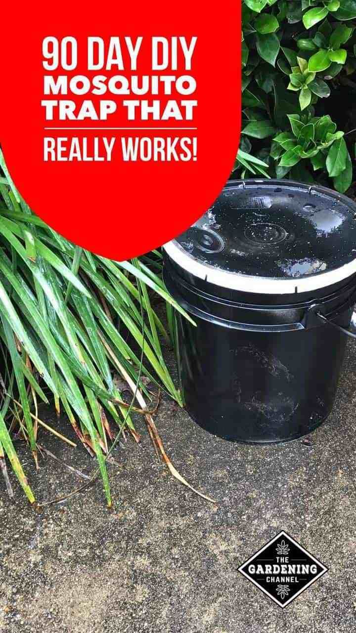 Diy mosquito trap with a 3 or 5 gallon bucket mosquito