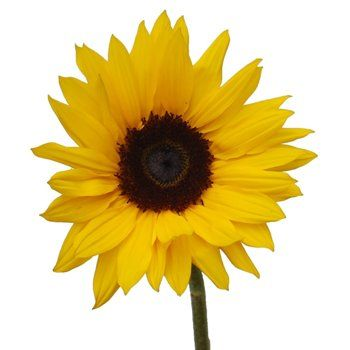 Small sunflowers sunflowers weddings and wedding fun centerpieces mightylinksfo Choice Image
