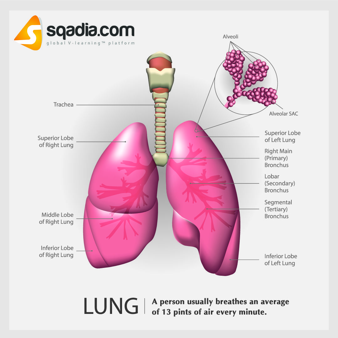 How To Get Rid Of Carbon Dioxide In Your Lungs