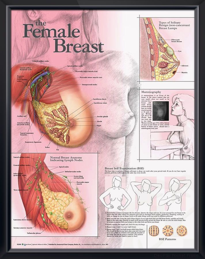 Female Breast anatomy poster shows surface anatomy and major muscles ...