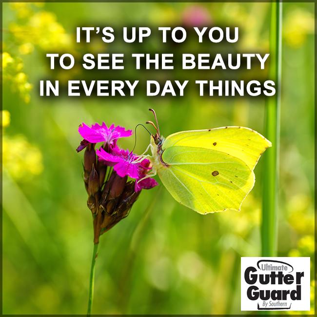 See Beauty Everywhere Southern Beauty Window Company