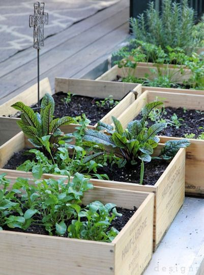 Container Gardening Idea Make A Wine Box Salad Garden Small