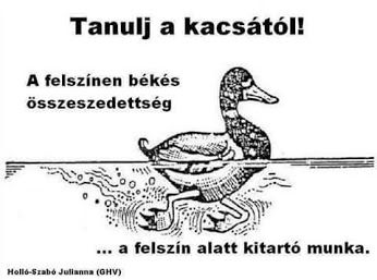 Kačicaa