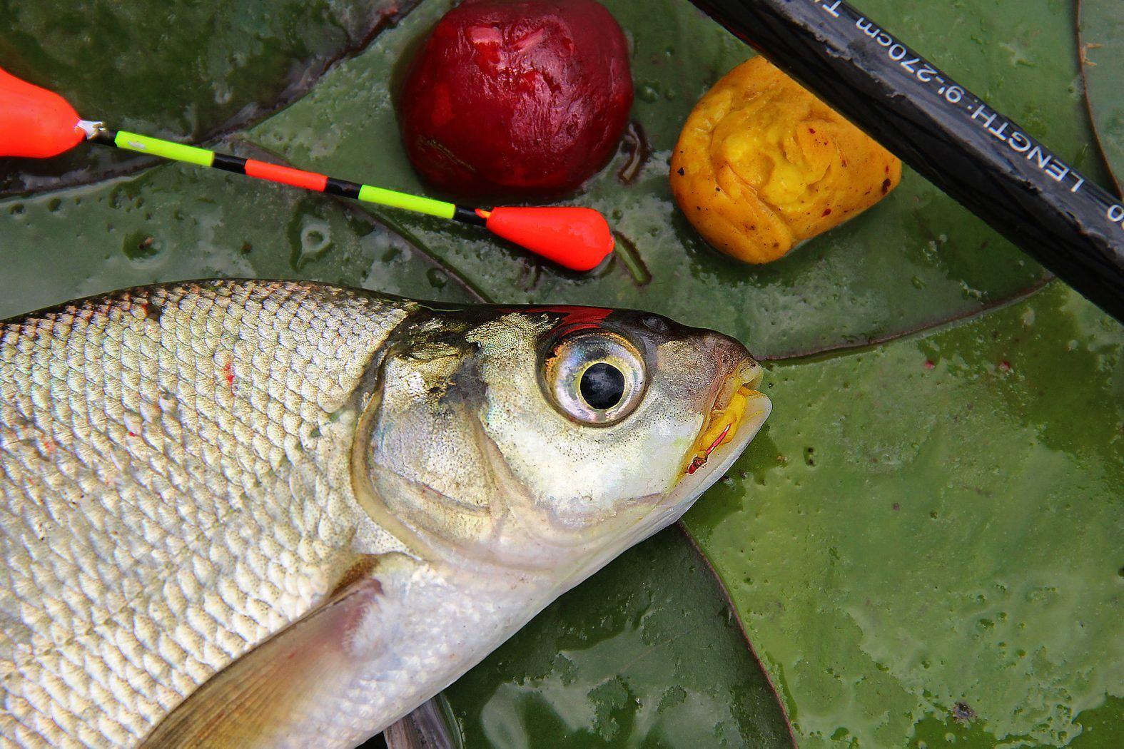 Klassiker zum Kneten | Gefüllter fisch, Karpfen angeln und