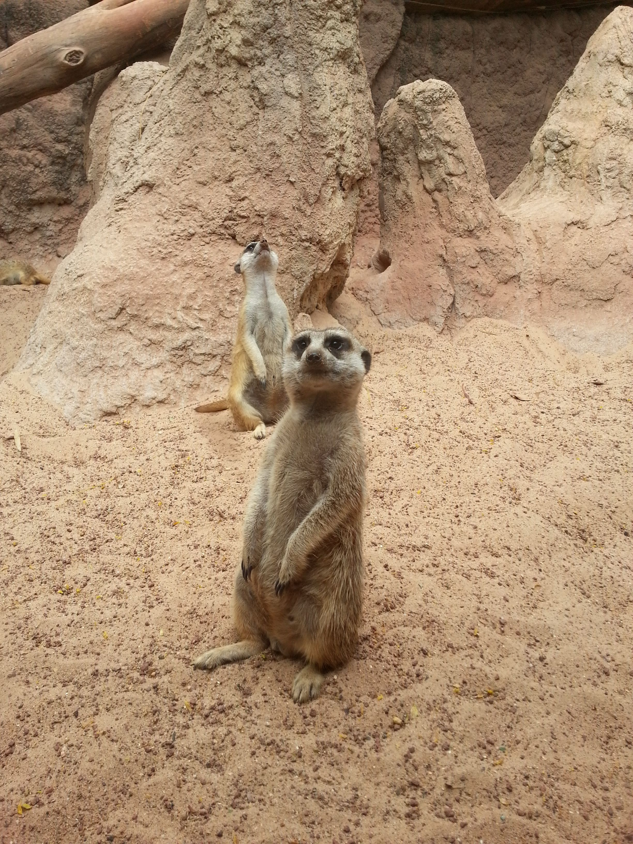 14+ What kind of animal is timon images