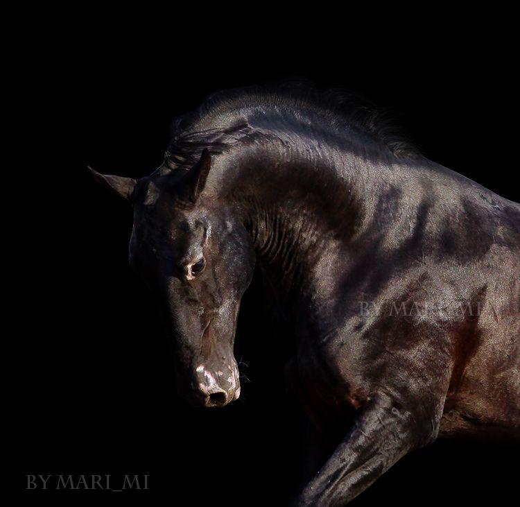 from the dark | Flickr - Photo Sharing!