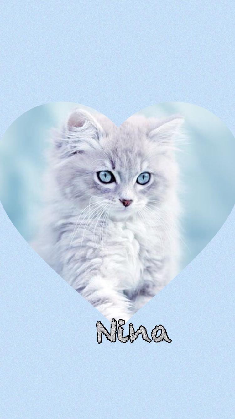 Pin Von Bettina Harter Auf Tierbilder Susse Katzen Tierbilder Tiere