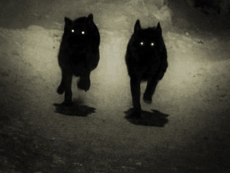 Black Dog Is Often Used As A Synonym For Ghost Dog Though Some Phantom Dogs Are White Instead Of Black In 2020 Scary Dogs Wolf Black And White Ghost Dog