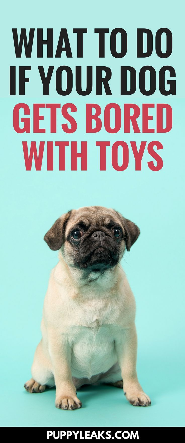 What To Do If Your Dog Is Bored With Their Toys | Dog, Toy and Dog care | Dog Toys To Keep Them Busy
