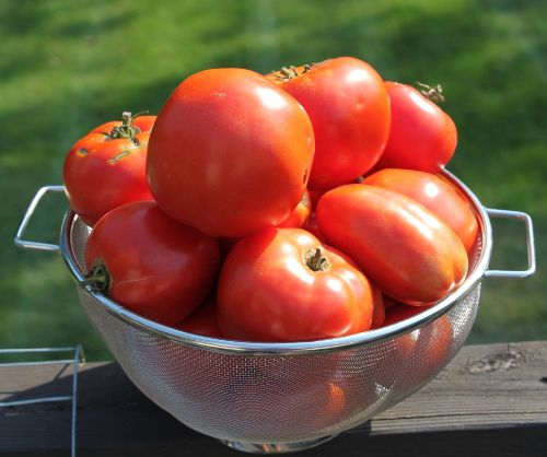 Grow amazing tomatoes this year!