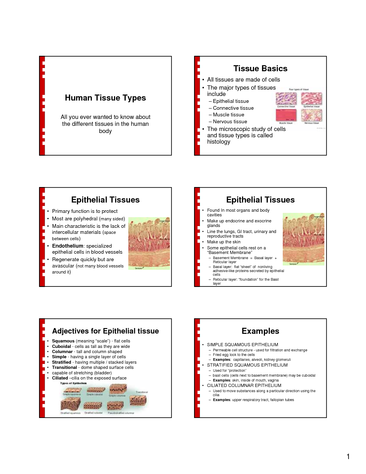 tissues essay Permanent tissue is composed of cells that have lost the power of dividing and has attained a 3 types of permanent tissues and their functions article essays, articles and other allied information submitted by visitors like you before sharing your knowledge on this site, please.