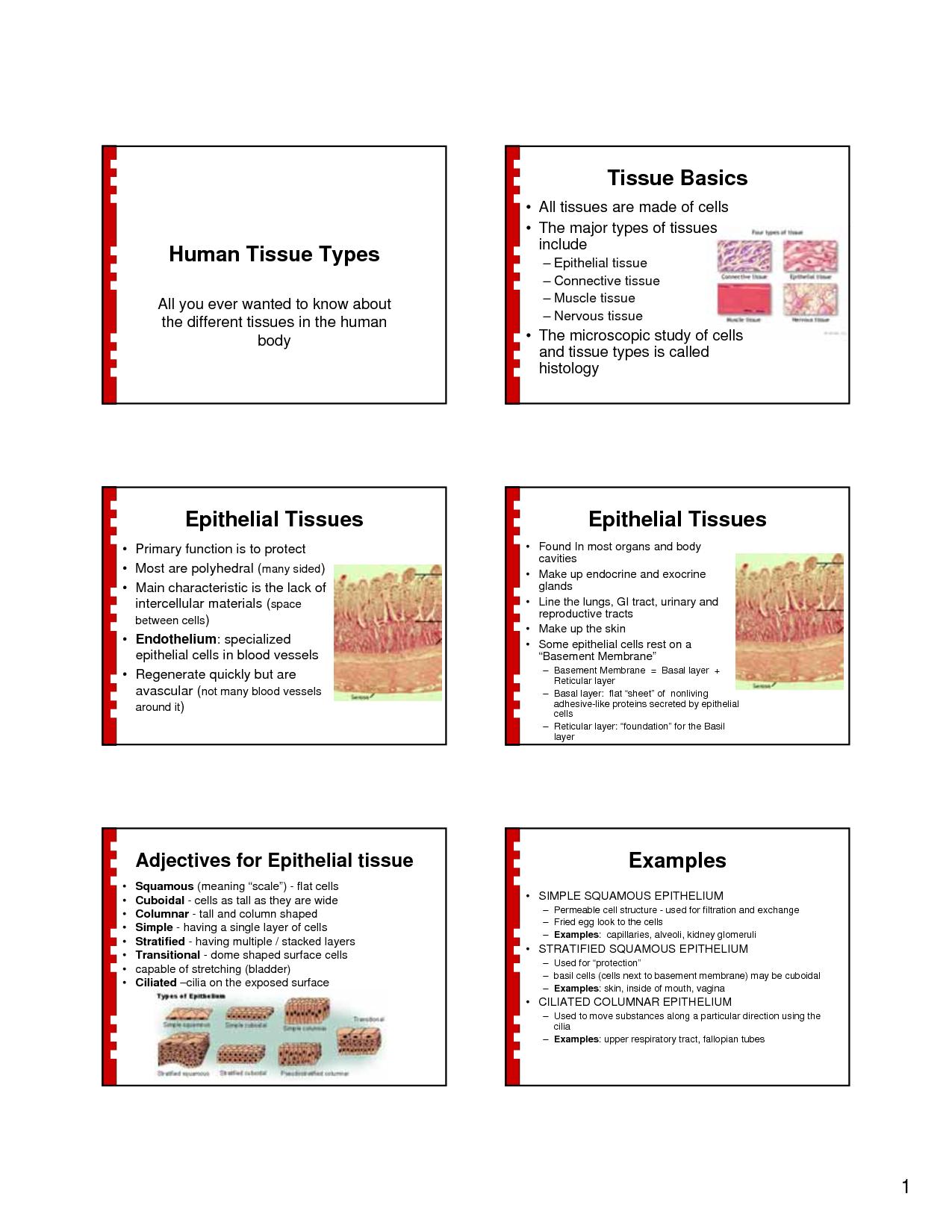 Human Tissue Human Tissue Types Tissue Basics Epithelial Tissues