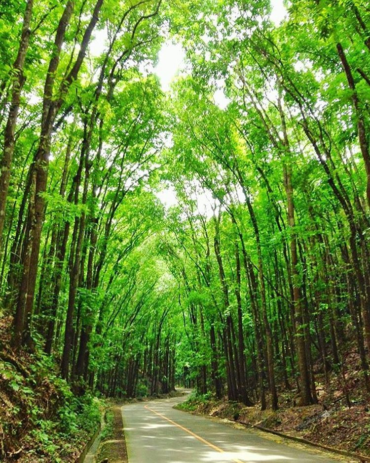 Image result for man made forest