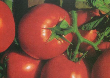 Vegetable Garden Ohio Plants Nursery Reynoldsburg Ohio Garden