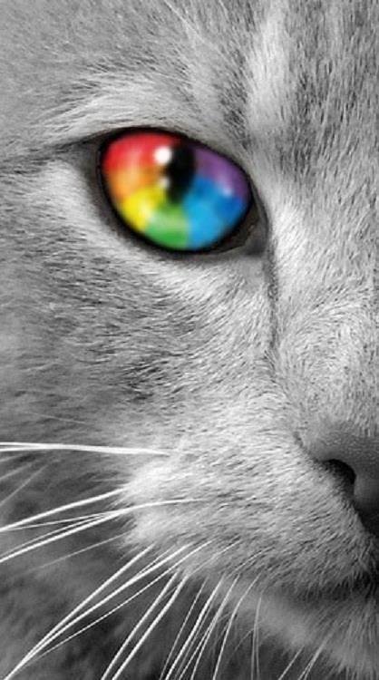 Rainbow Cat S Eye Could Not Trace The Photographer And The Person Who Photoshopped Gatos Bebe Animais Bonitos Felinos