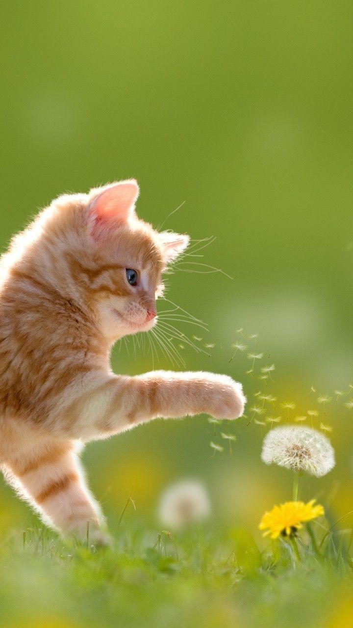 Cat Pictures おしゃれまとめの人気アイデア Pinterest Babicka Babicka 子猫 かわいい子猫 ねこ