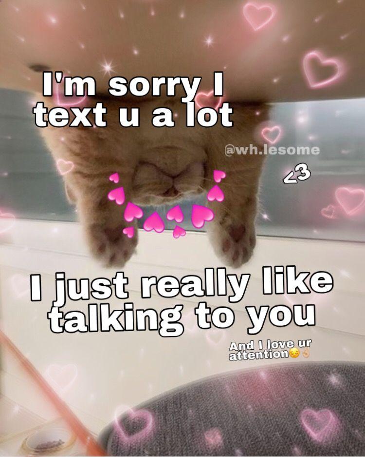 Wholesome Meme Wholesome Memes Cute Love Memes Cute Cat Memes