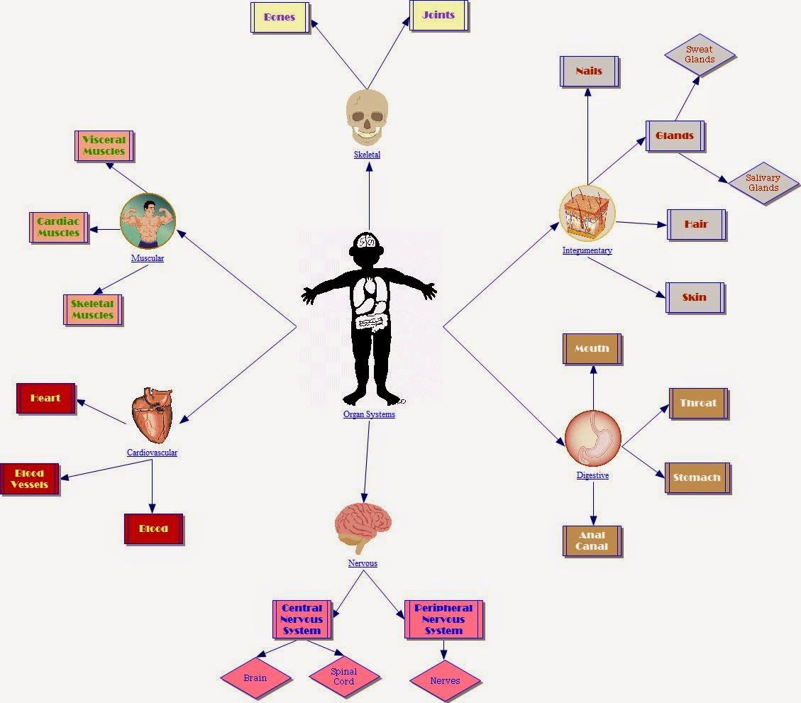Life Science Concept Map
