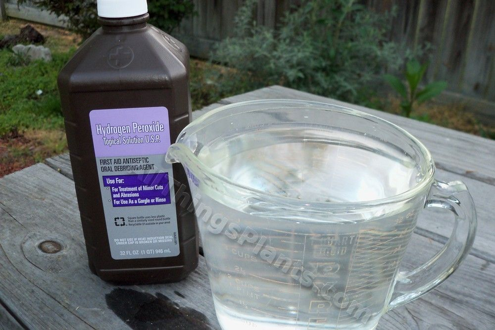 Hydrogen Peroxide for Seed Starting Seeds, Seed starting