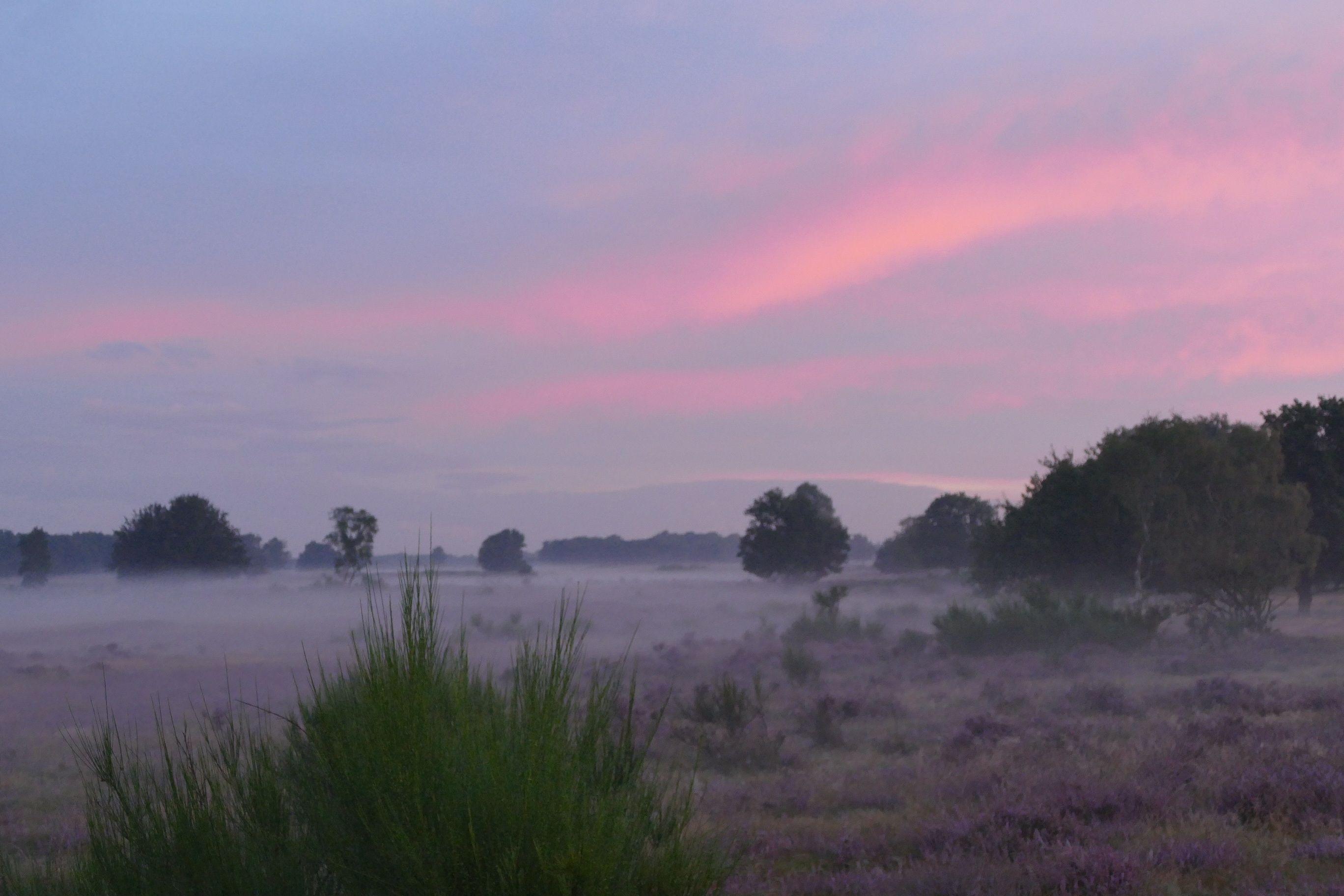 heidelandschap in de mist