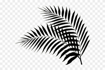 Free Download Black Palm Leaf Png Palm Leaves Png White Tree Branches