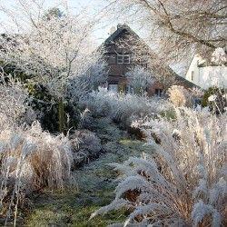 Der Garten Im Winter Garden Style Garden Hippie Garden Garden
