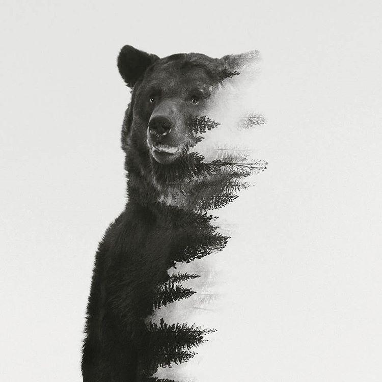 andreaslie #bear   Tats! <3 and piercings   Pinterest   Bär tattoos ...