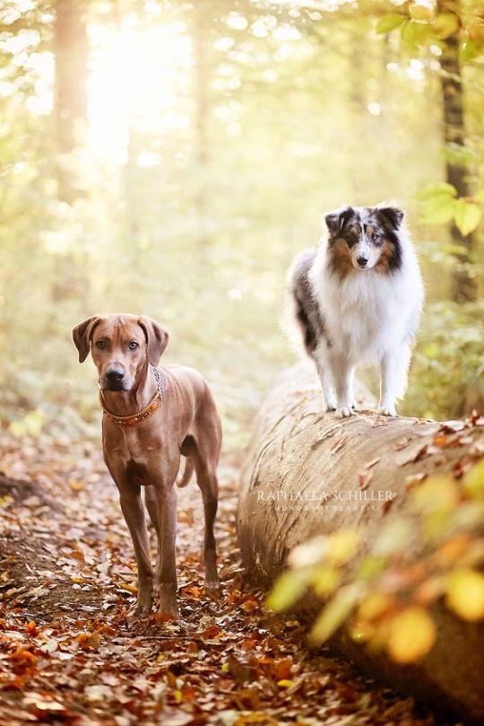 Pin Von Levonda 2 Auf Beautiful Autumn Days Hundefotografie Haustierfotografie Tierfotografie