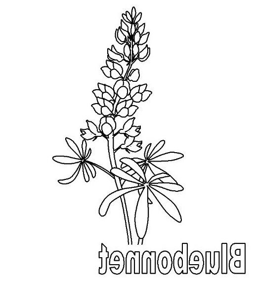 bluebonnet coloring page free | Coloring Board | Pinterest