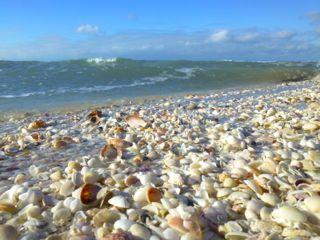 Sanibel Island Florida Seashells Beach