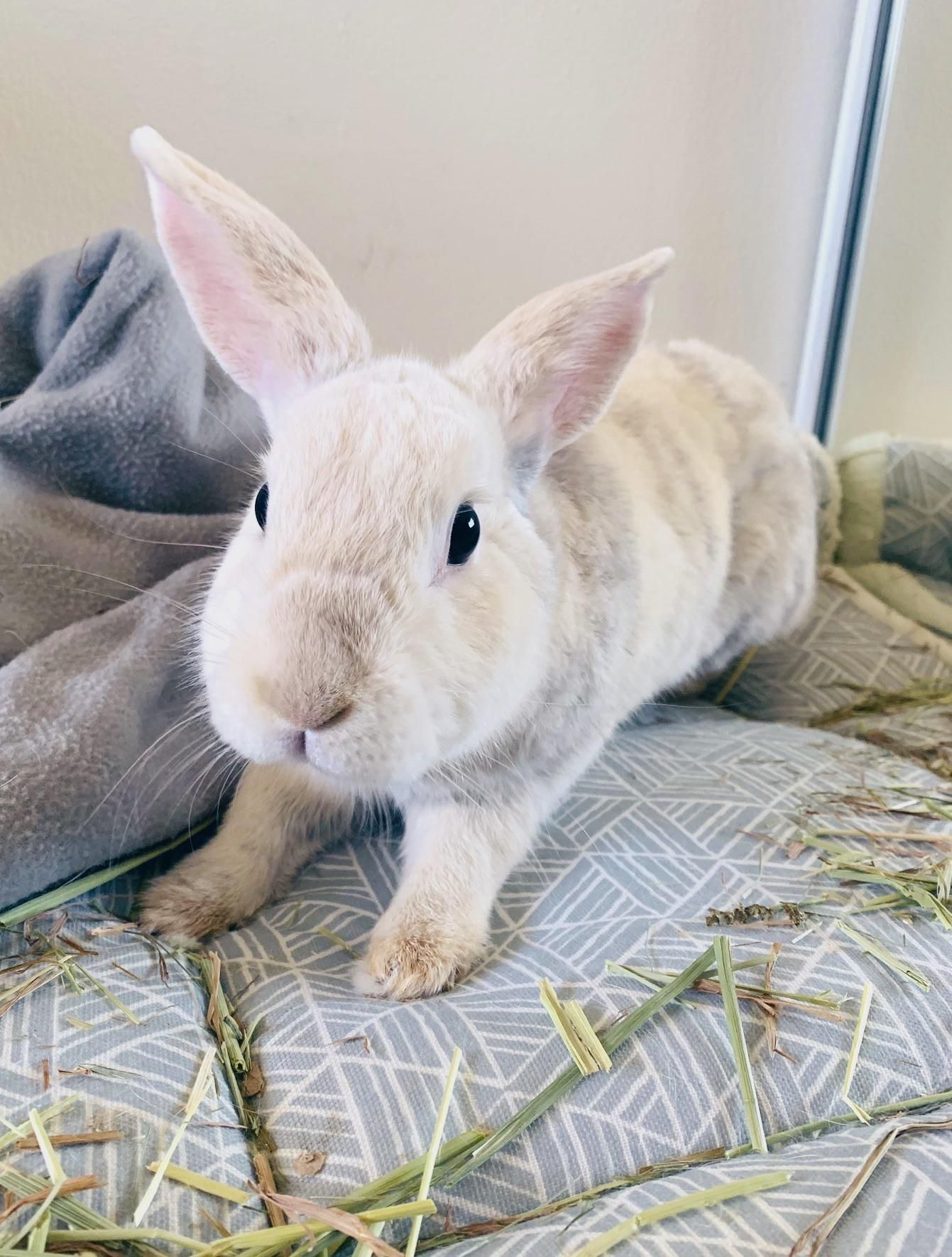 Are rabbits easy to look after low maintenance pets