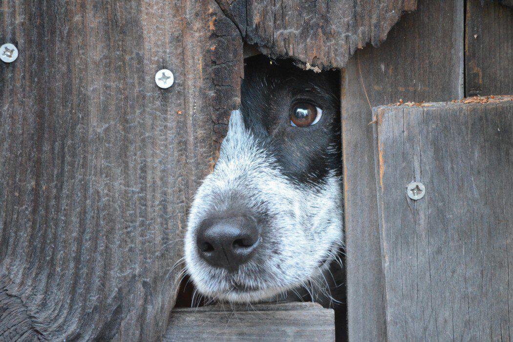 12++ Terre haute animal shelter ideas