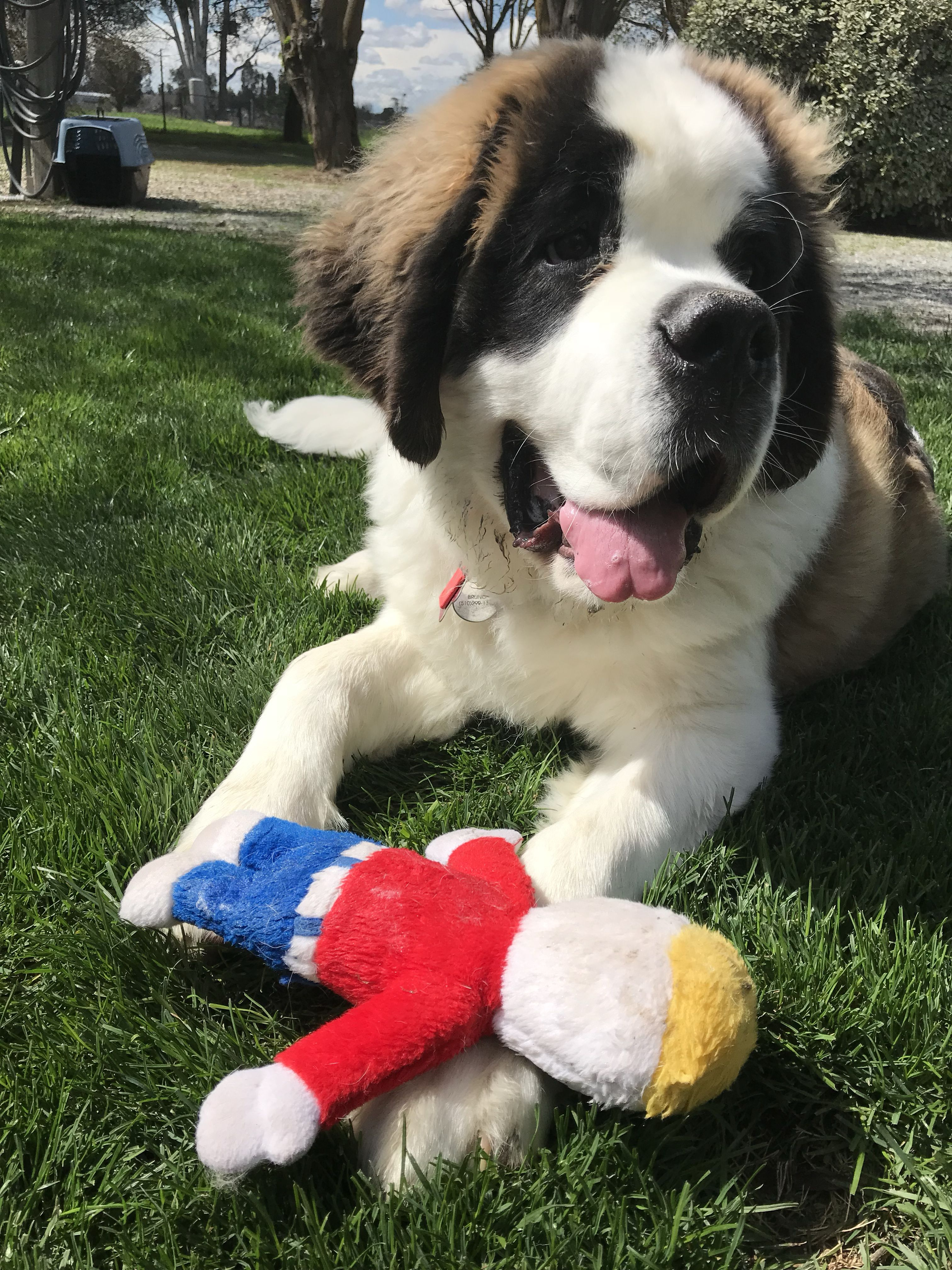 Craigslist Pets Fresno Clovis