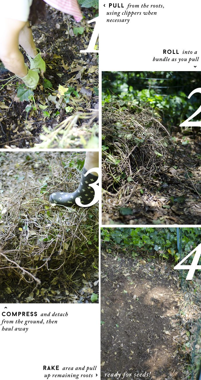 How to Get Rid of Ivy With White Vinegar