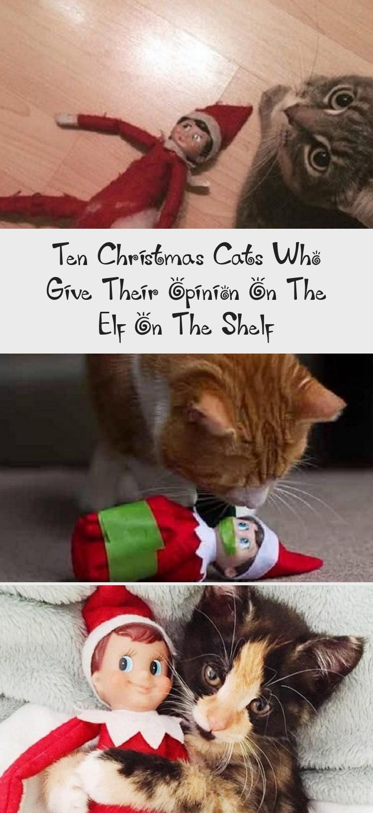 Ten Christmas Cats Who Give Their Opinion On The Elf On The Shelf Christmas Cats Elf Black Cat Humor