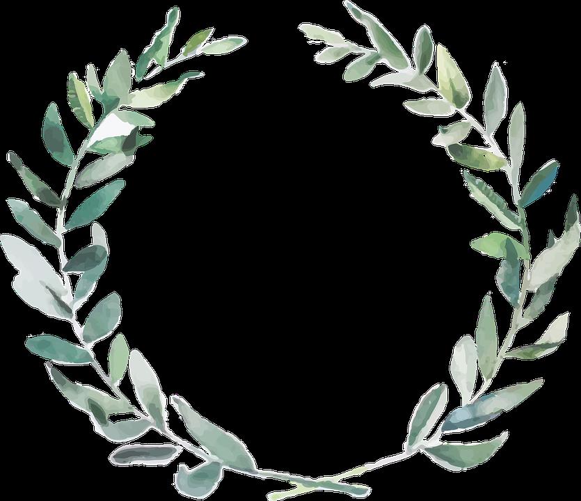 Free Image on Pixabay Branch, Olive, Nature, Boho