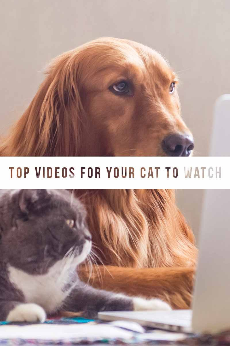 Videos For Cat To Watch And What They Actually See Cats Cat