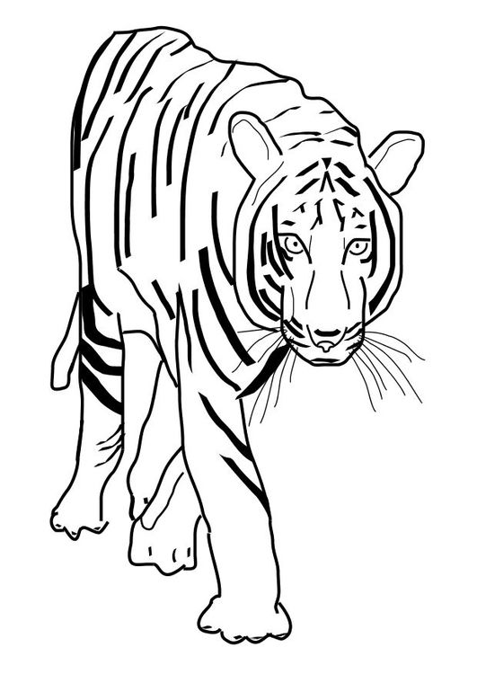 Coloring page tiger   Coloring Pages for All Ages   Pinterest