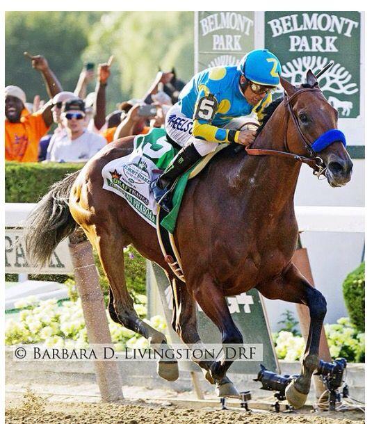 Winner American pharaoh 2015