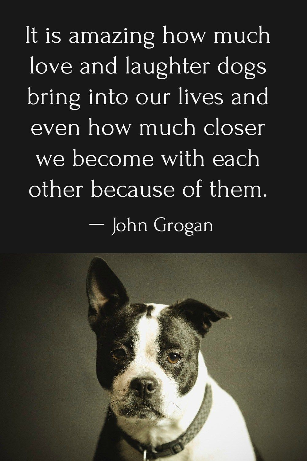 Dog Quotes A Snorkey Day Pets And Pet Care Pinterest Dog
