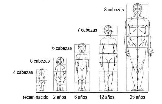 Proporciones Del Cuerpo Humano Da Vinci Y Vitruvio Los Canones Proporciones Del Cuerpo Humano Bocetos Del Cuerpo Humano Cuerpo Humano Dibujo