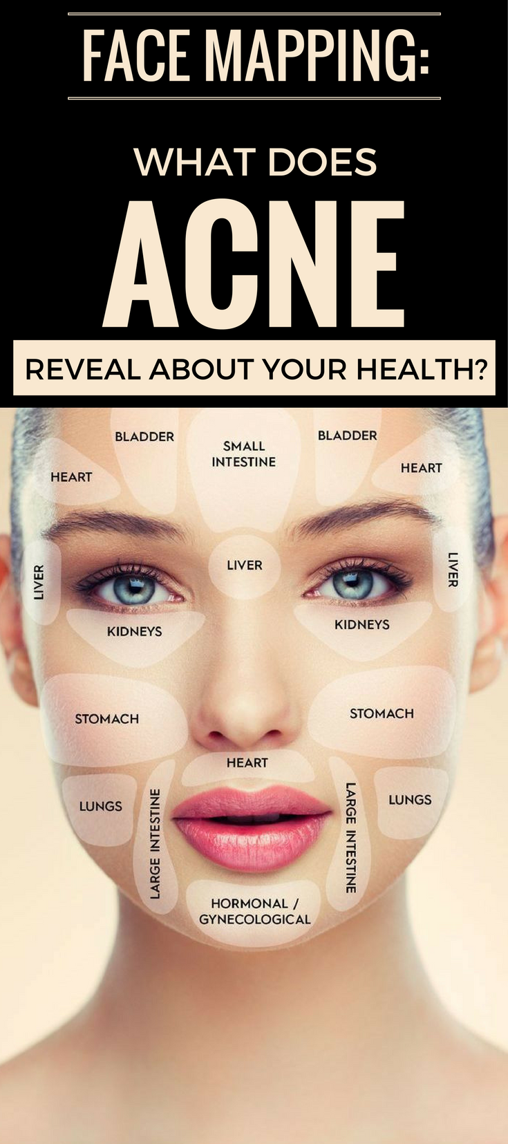 face mapping what does acne reveal about your health important acne area meaning acne diagram face [ 735 x 1655 Pixel ]