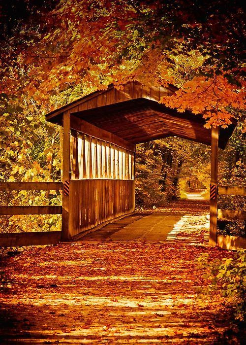 ღℳóทicɑ͜͡❥ on Twitter #autumnscenes