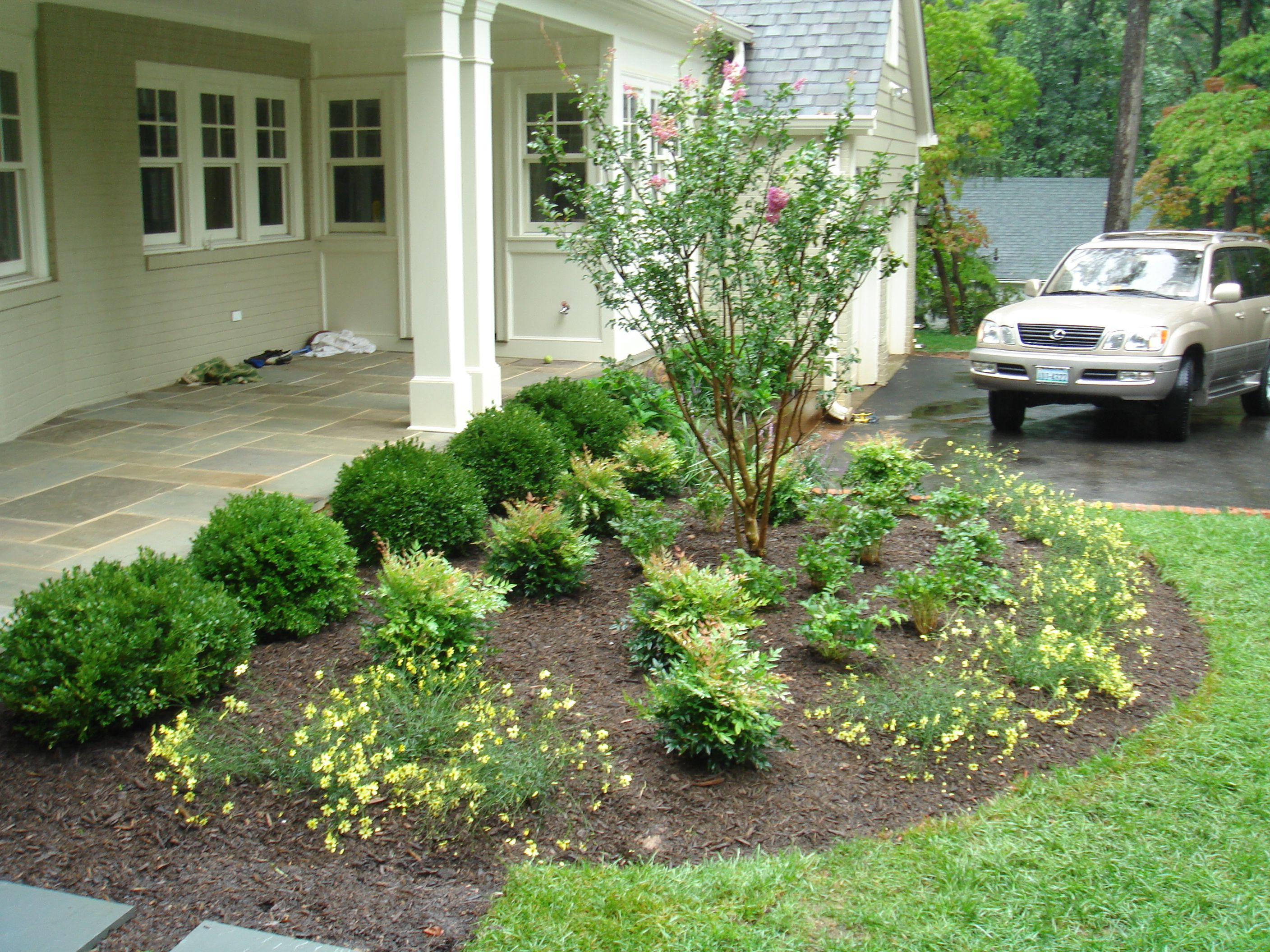simple front yard landscaping ideas with trees on a budget love the little yellow flowers