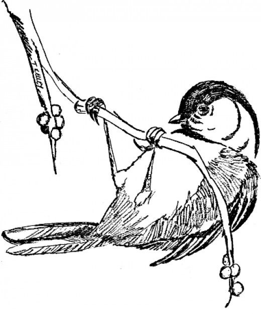 Free Online Pictures of Birds to Color for Adults and Kids | All ...