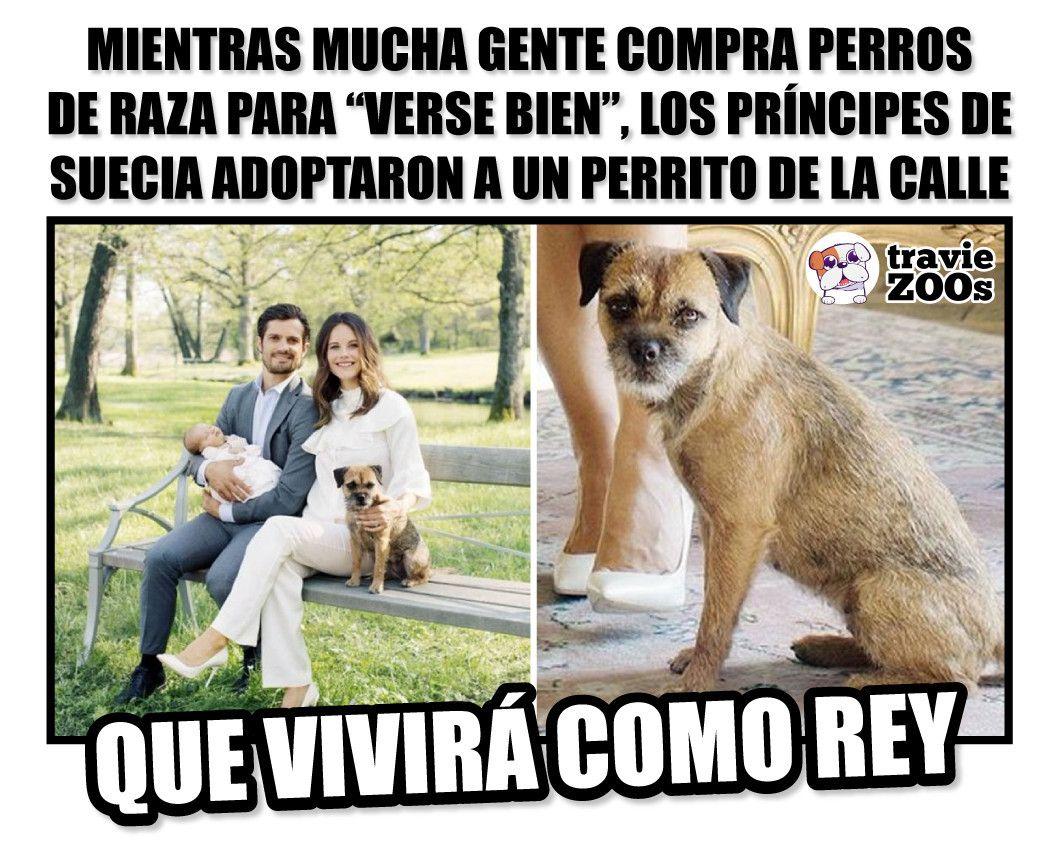 Porque No Necesitas Un Perro De Raza Para Entregar Todo Tu Amor Humor De Animal Perros Videos De Animales Chistosos