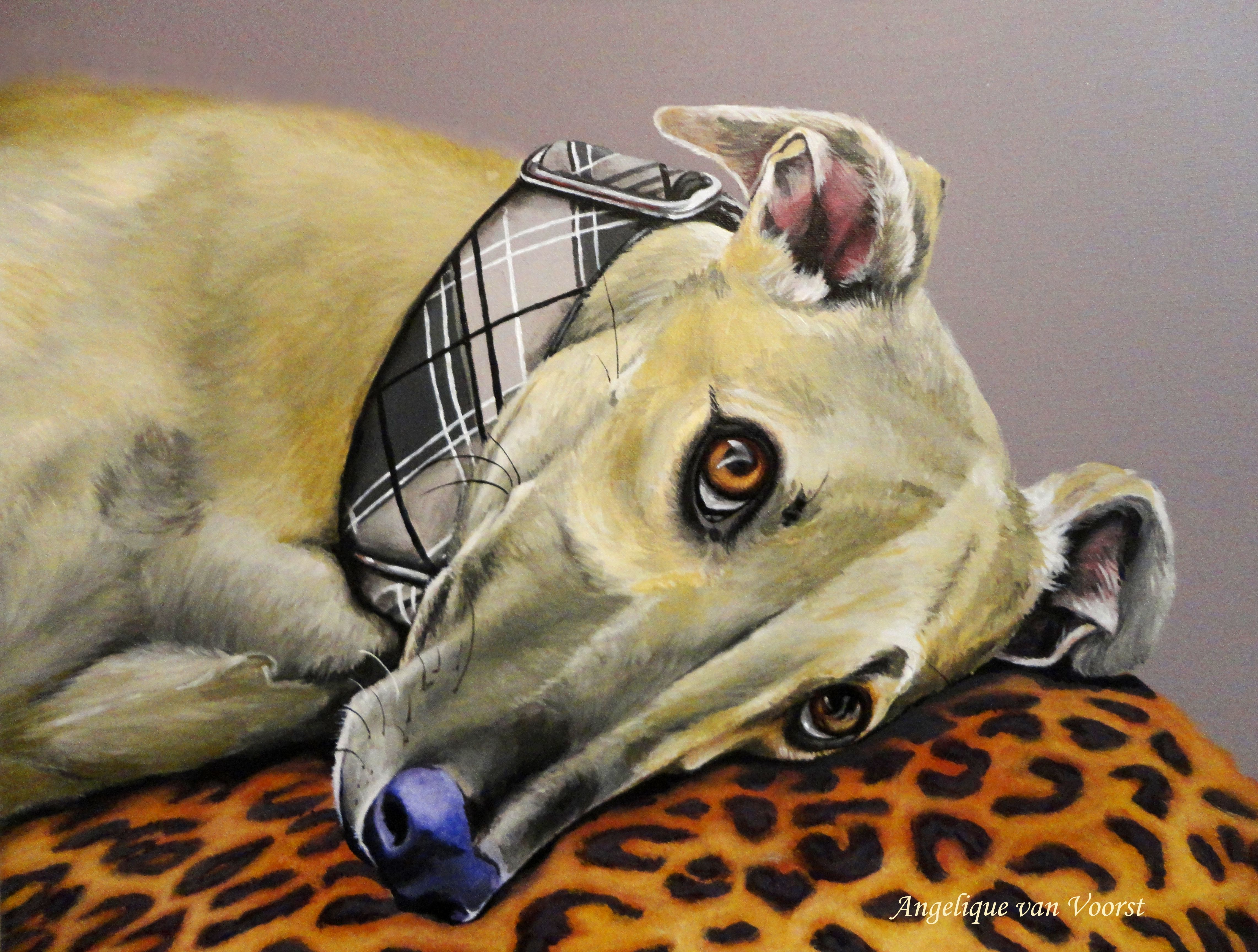 """Cat-nap"",  acrylic painting, 50x70 cm Vrij werk"